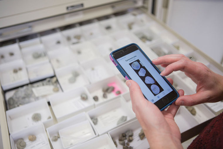 PaleoNICHES: Digitization of fossil collections