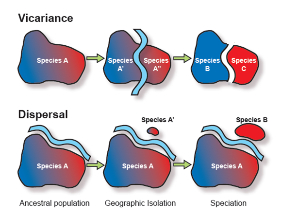 Biogeographic controls on speciation